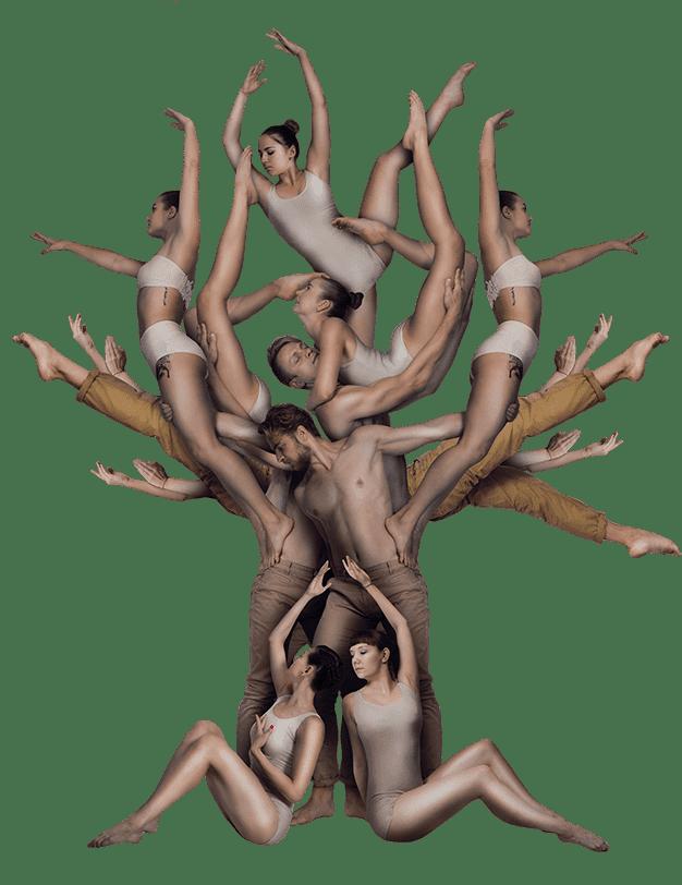 shadow_theatre_verba_tree